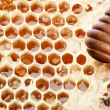 Honeycombs and wooden stick. - Stock Photo