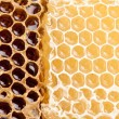 Honeycombs. — Stock fotografie