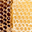 Stock Photo: Honeycombs.