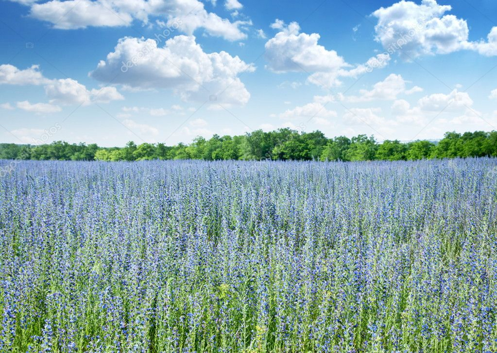 Beautiful field of wild flowers and blue cloudly sky on the background. — Stock Photo #6039041