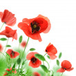 Beautiful red poppies isolated on a white background. — Stock Photo #6040377