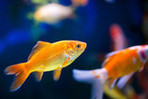 Fish in aquarium — 图库照片