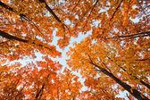 Bright oak — Stock Photo