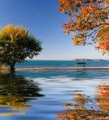 Beautiful tree by the lake — Stock Photo
