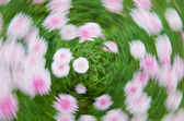 Flower vortex — Stock Photo