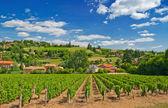 Vineyard in Beaujolais region, France — Stock Photo