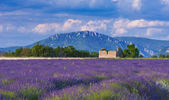 Windy afternoon in Provence — Stock Photo