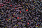 Fresh Organic Black Mulberry — Stock Photo