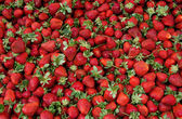 Fresh Organic Ripe Strawberrys — Stock Photo