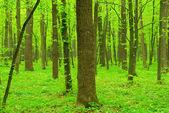 Green trees — Stock Photo