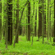 Forest landscape - Foto Stock