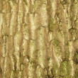 Tree bark texture - Stockfoto