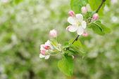 Spring branch — Stock Photo