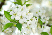 Branch with flowers — Stock Photo