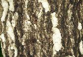 Textura da casca — Foto Stock