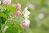 Flores brancas — Foto Stock
