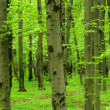 Green forest — Stock Photo #5756109