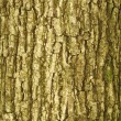 Stock Photo: Bark texture