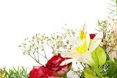 Kwiaty na białym tle — Zdjęcie stockowe