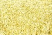 Fields of wheat — Stock Photo