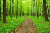 Path in forest — Stockfoto