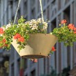Suspended flowerpot in a city — Stock Photo
