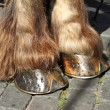 Hoofs of a horse — Stock Photo