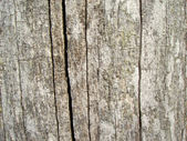 Background from very old wood — Stock Photo