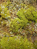 Moss and lichen in spring wood — Stock Photo