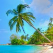 Palm Tree by the Beach - Stock Photo