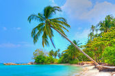 Palm Tree by the Beach — Stock Photo