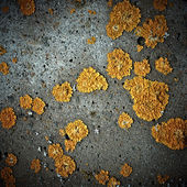 Lichens on stone texture, closeup — Stock Photo