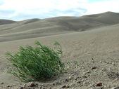 Die Wüste lebt — Stock Photo