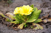 Small yellow flower — Stock Photo