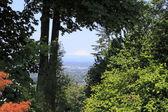 Mt. St. Helens — Stock Photo