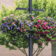 Flower Baskets Hanging - Stock Photo