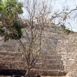 Panorama of Copan ruins — Stock Photo