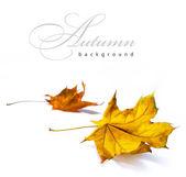 Streszczenie tło jesień — Zdjęcie stockowe