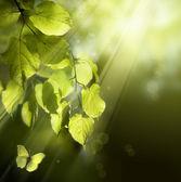 艺术蝴蝶在弹簧上叶 — 图库照片