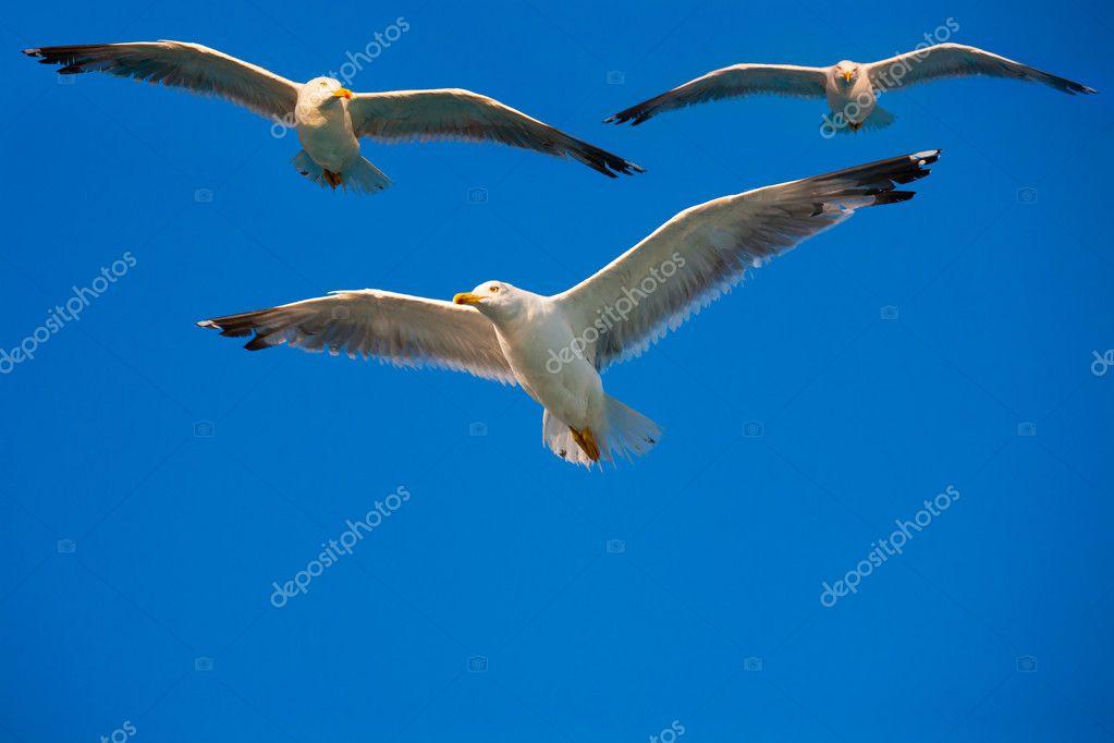 在天空中飞翔的鸟
