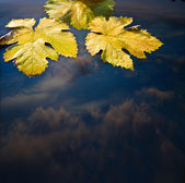 Autumn leaves and water abstract background — Stock Photo