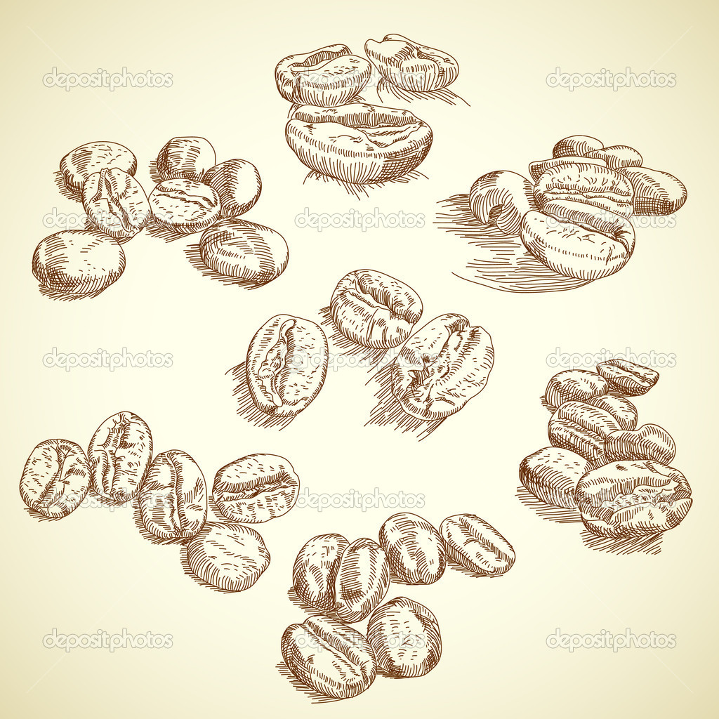 Coffee Bean Drawing Coffee Bean This Illustration