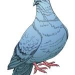 Blue pigeon — Stock Vector #5852639