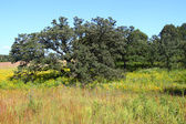Nachusa Grasslands - Illinois — Stock Photo