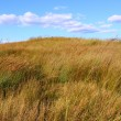 Nachusa Grasslands - Illinois — Stock Photo