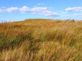 Nachusa grasland - illinois — Stockfoto
