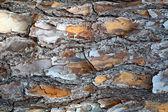 Pine Bark Background — Stock Photo