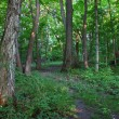 Forest Scenery - Shabbona, Illinois - Stock Photo