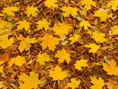 Yellow Leaf Background — Stock Photo