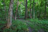 Forest Scenery - Shabbona, Illinois — Stock Photo